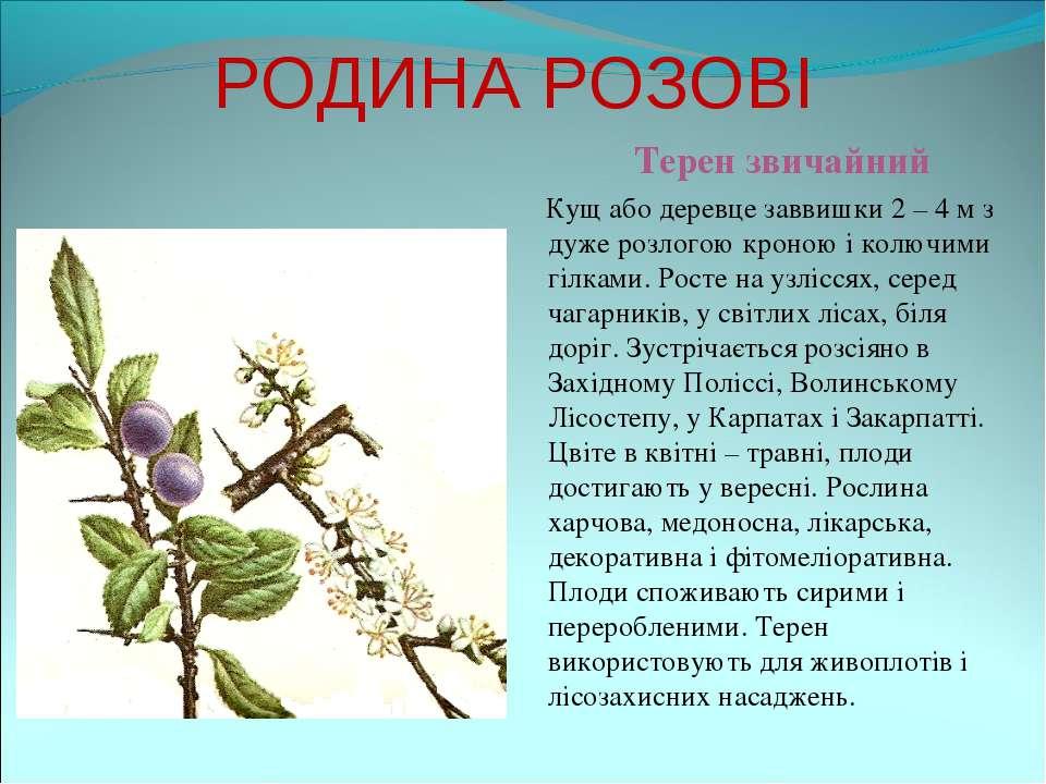 РОДИНА РОЗОВІ Терен звичайний Кущ або деревце заввишки 2 – 4 м з дуже розлого...