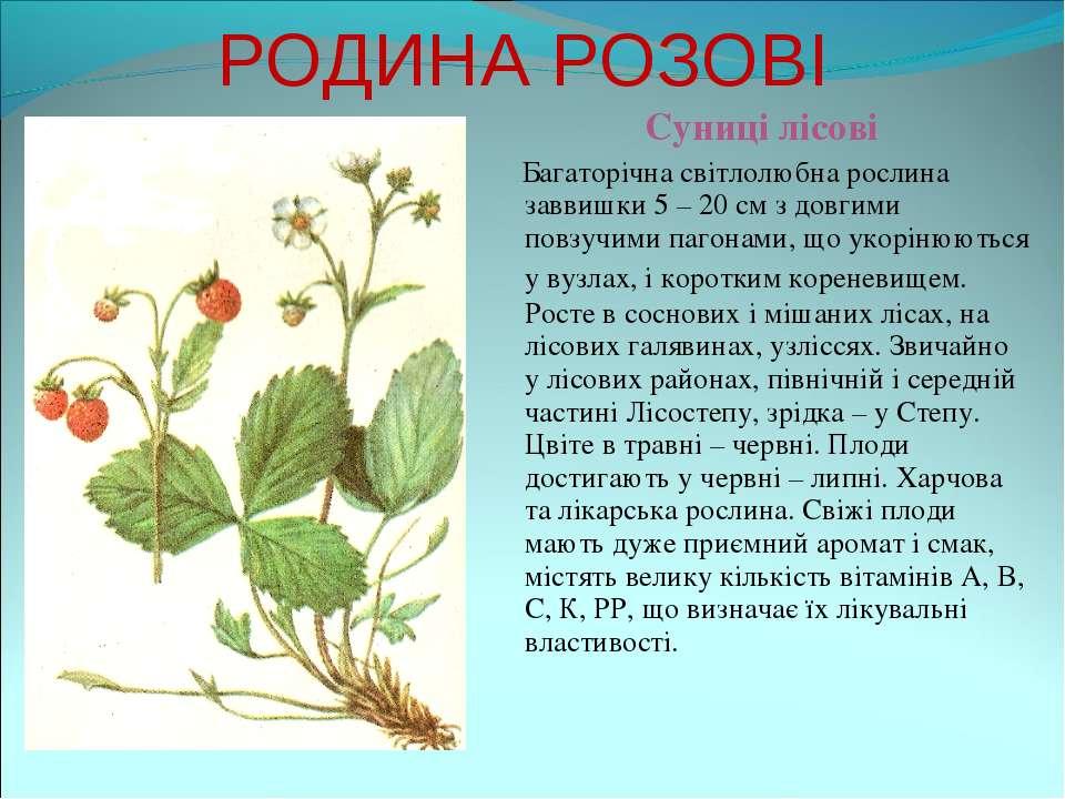 РОДИНА РОЗОВІ Суниці лісові Багаторічна світлолюбна рослина заввишки 5 – 20 с...