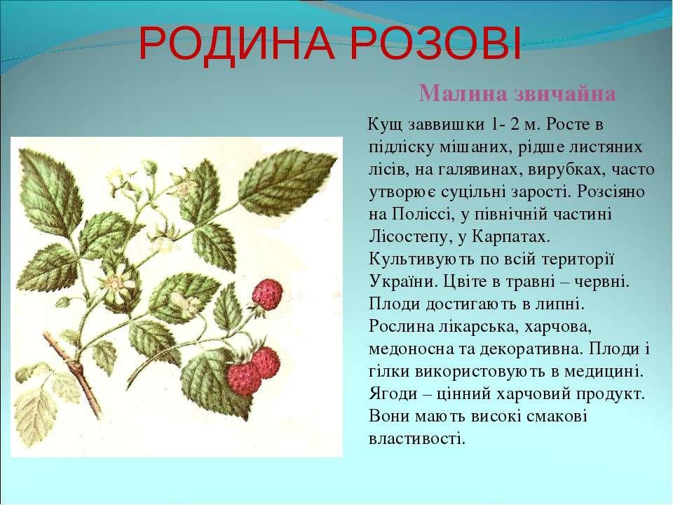 РОДИНА РОЗОВІ Малина звичайна Кущ заввишки 1- 2 м. Росте в підліску мішаних, ...