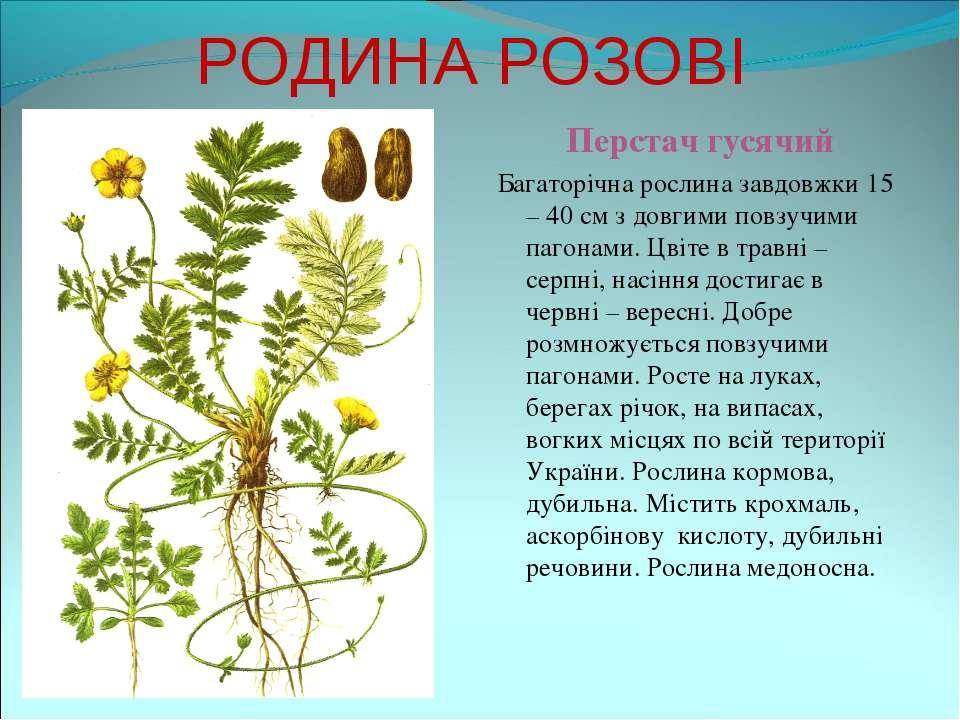РОДИНА РОЗОВІ Перстач гусячий Багаторічна рослина завдовжки 15 – 40 см з довг...