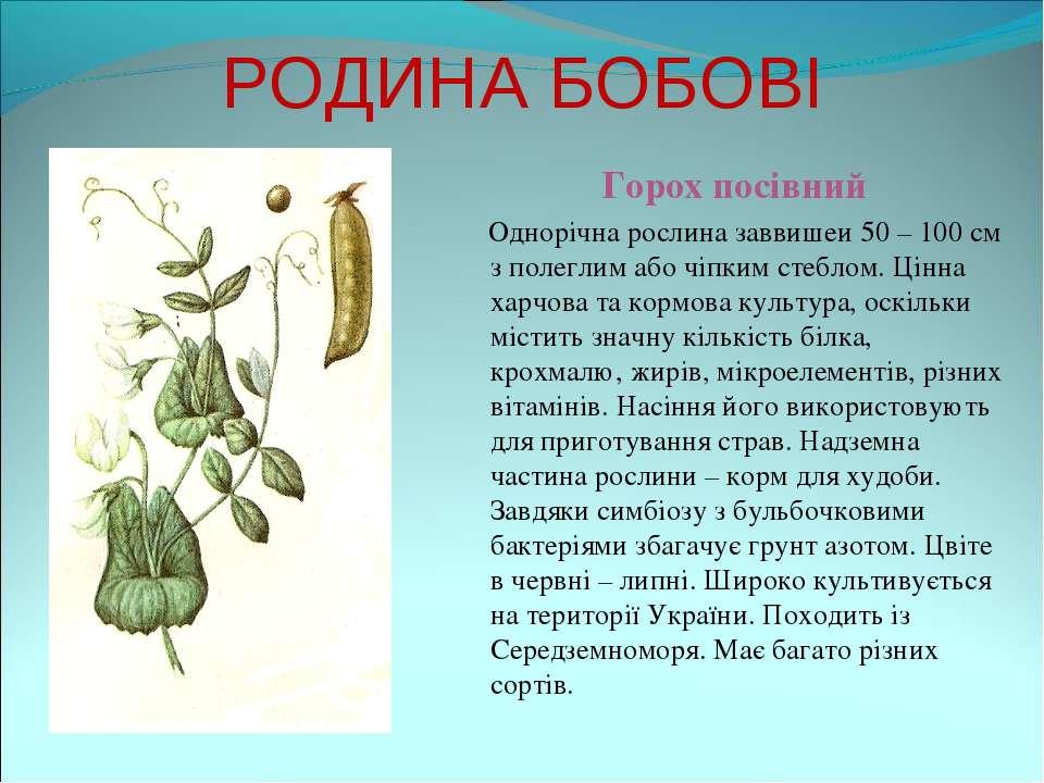 РОДИНА БОБОВІ Горох посівний Однорічна рослина заввишеи 50 – 100 см з полегли...