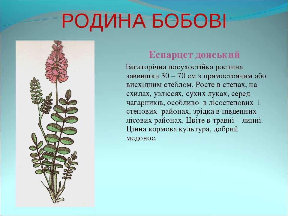 РОДИНА БОБОВІ Еспарцет донський Багаторічна посухостійка рослина заввишки 30 ...