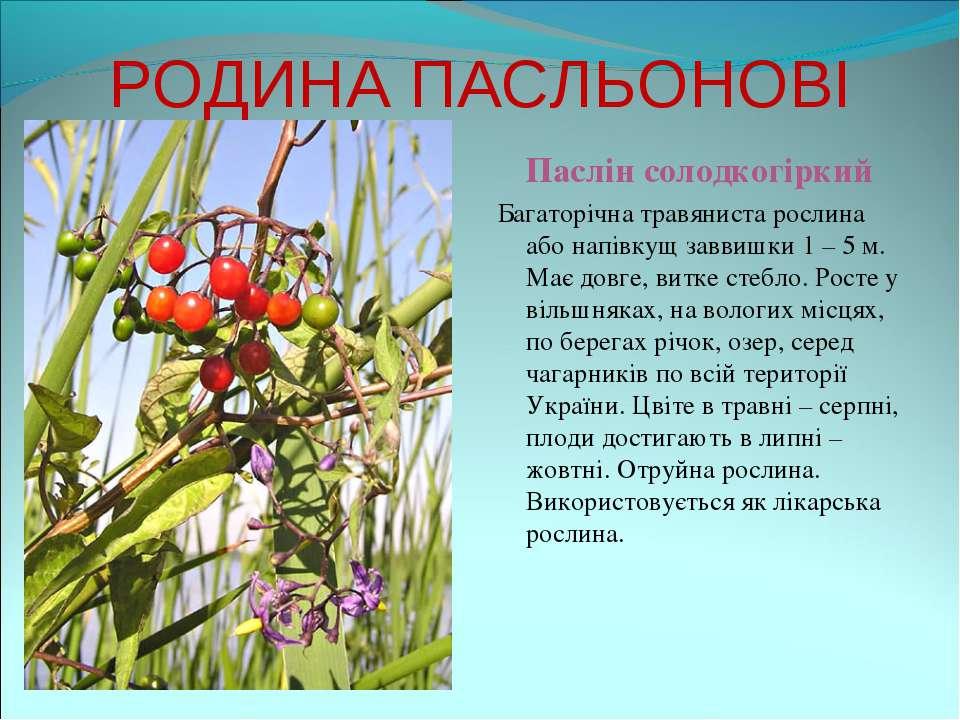 РОДИНА ПАСЛЬОНОВІ Паслін солодкогіркий Багаторічна травяниста рослина або нап...