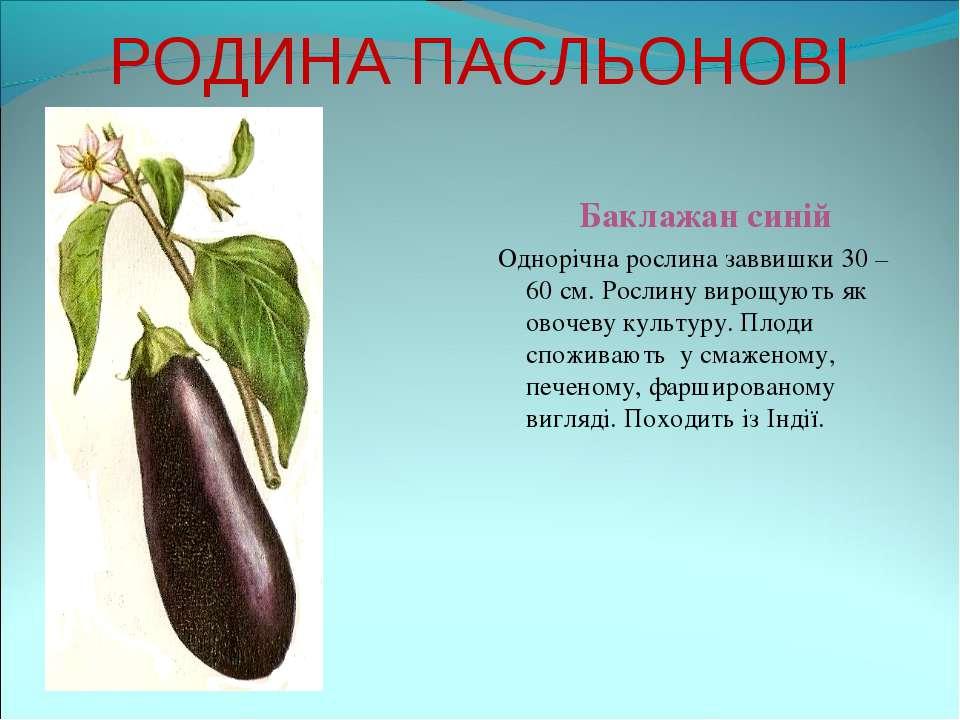 РОДИНА ПАСЛЬОНОВІ Баклажан синій Однорічна рослина заввишки 30 – 60 см. Росли...
