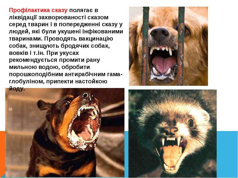 Профілактика сказу полягає в ліквідації захворюваності сказом серед тварин і ...