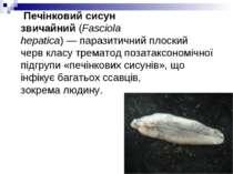 Печінковий сисун звичайний(Fasciola hepatica)—паразитичнийплоский червкл...