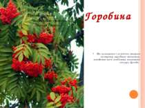 Горобина На галявинах і узліссях можна зустріти горобину звичайну, плодами як...
