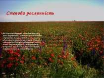 Степова рослинність На Україні степова зона займає 40% усієї території. Степ...