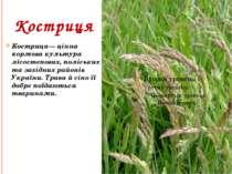 Костриця Костриця— цінна кормова культура лісостепових, поліських та західних...