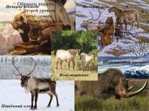 Печерні ведмеді Печерні леви Коні-тарпани Північний олень Шерстистий носоріг