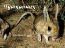 Тушканчик Тушканові поширені у Азії, на східній частині Європии та у Північні...
