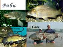 Риби Щука Карась Сом Лин
