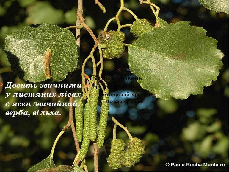 Досить звичними у листяних лісах є ясен звичайний, верба, вільха.