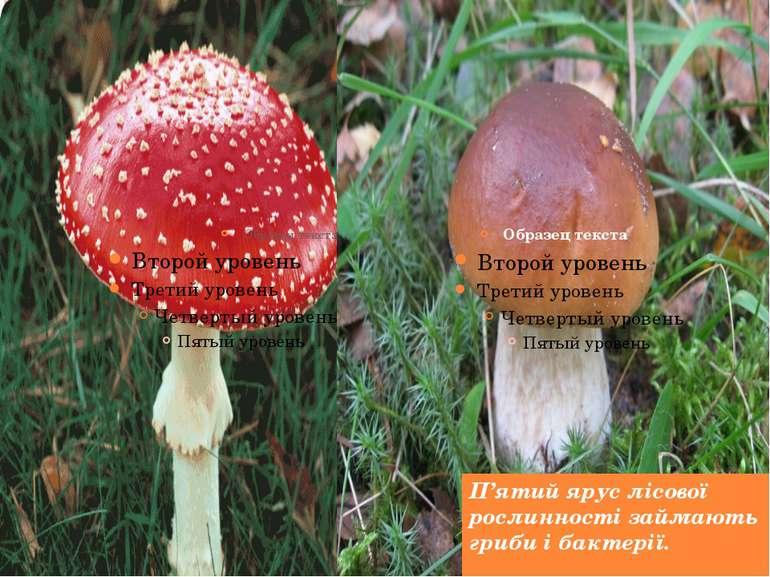П'ятий ярус лісової рослинності займають гриби і бактерії.