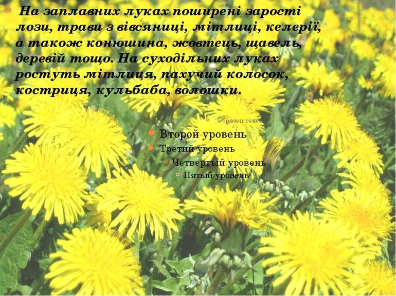 На заплавних луках поширені зарості лози, трави з вівсяниці, мітлиці, келерії...