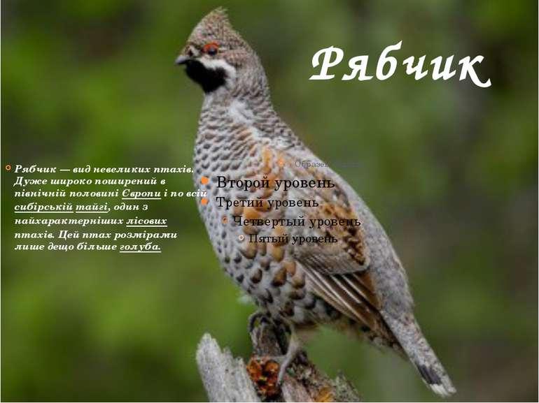 Рябчик Рябчик— вид невеликих птахів. Дуже широко поширений в північній полов...