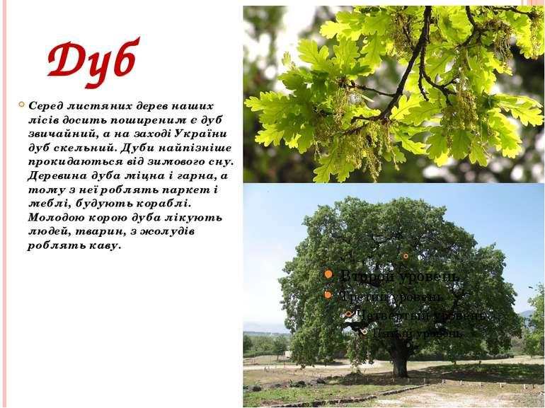 Дуб Серед листяних дерев наших лісів досить поширеним є дуб звичайний, а на з...