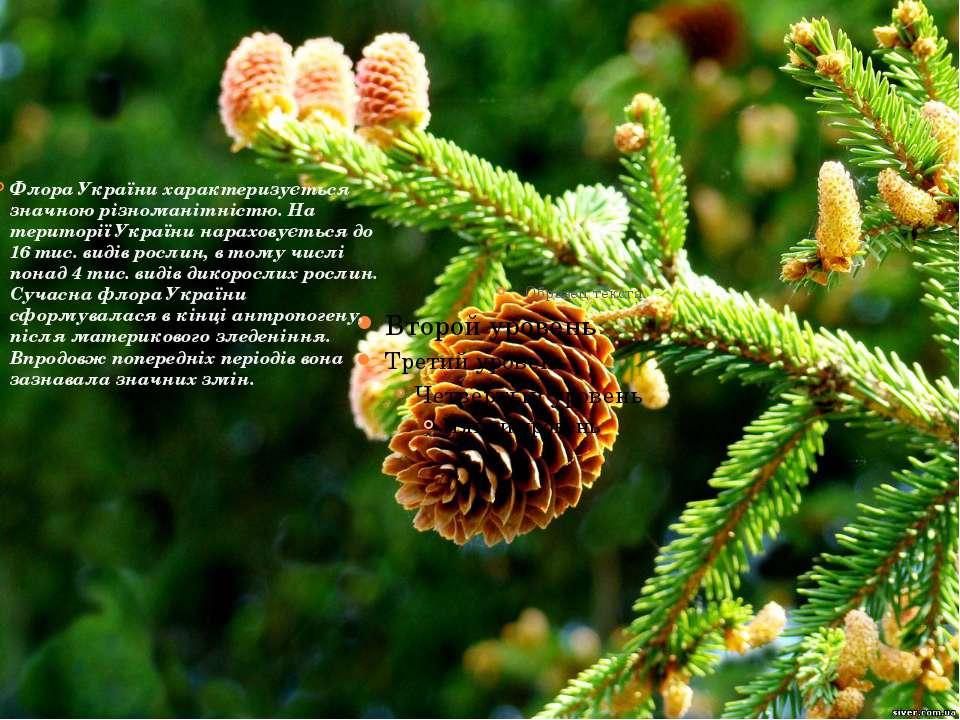 Флора України характеризується значною різноманітністю. На території України ...