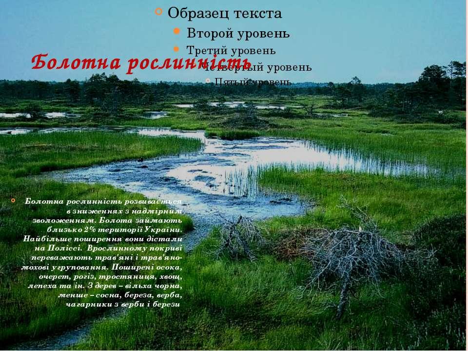 Болотна рослинність Болотна рослинність розвивається в зниженнях з надмірним ...