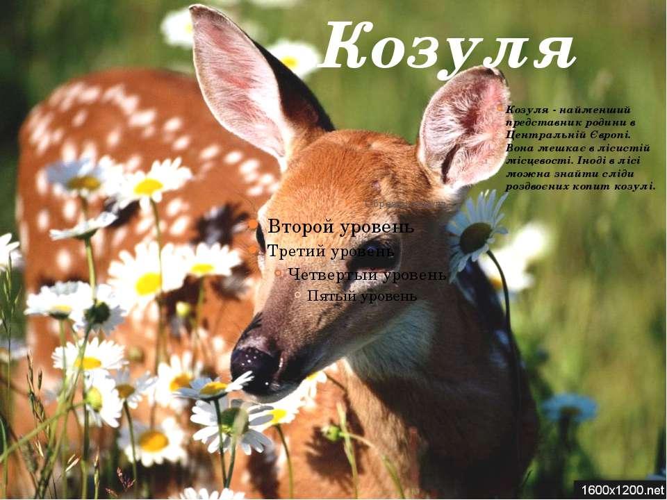 Козуля Козуля - найменший представник родини в Центральній Європі. Вона мешка...