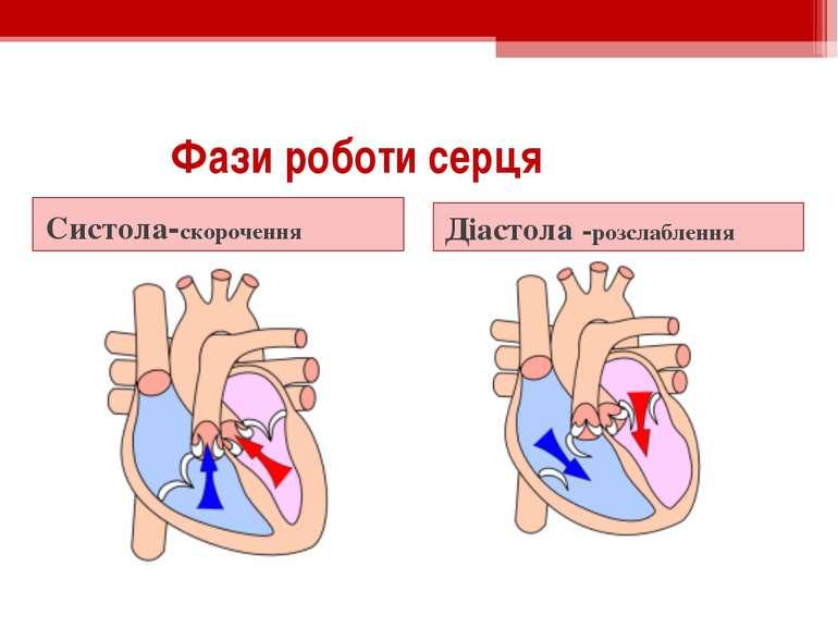 Фази роботи серця Систола-скорочення Діастола -розслаблення