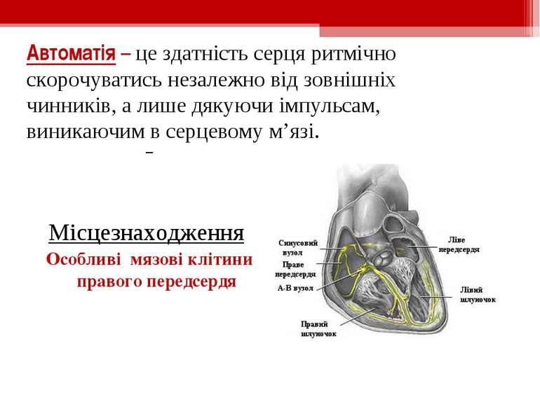 Автоматія – це здатність серця ритмічно скорочуватись незалежно від зовнішніх...