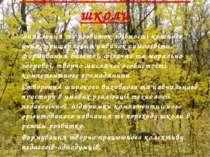 Стратегічні завдання школи Виявлення та розвиток здібності кожного учня, прищ...