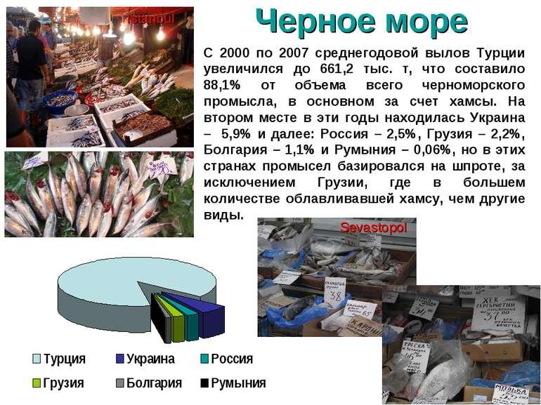 С 2000 по 2007 среднегодовой вылов Турции увеличился до 661,2 тыс. т, что сос...