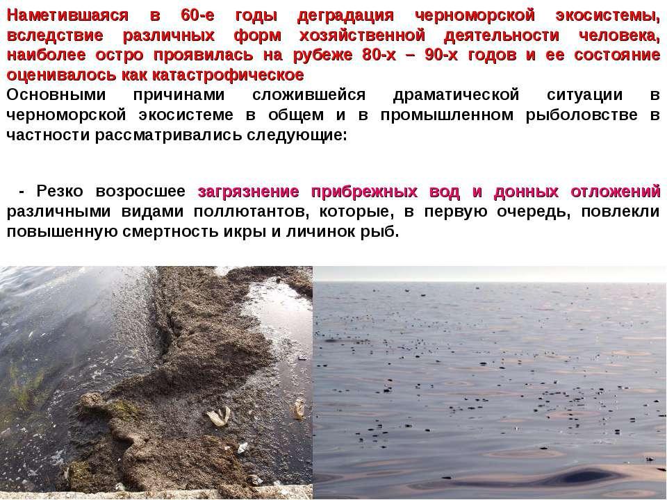 Наметившаяся в 60-е годы деградация черноморской экосистемы, вследствие разли...