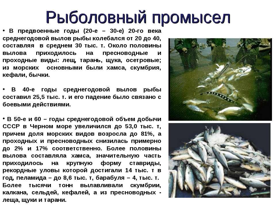 Рыболовный промысел В предвоенные годы (20-е – 30-е) 20-го века среднегодовой...