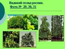 Видовий склад рослин. Фото № 29, 30, 31