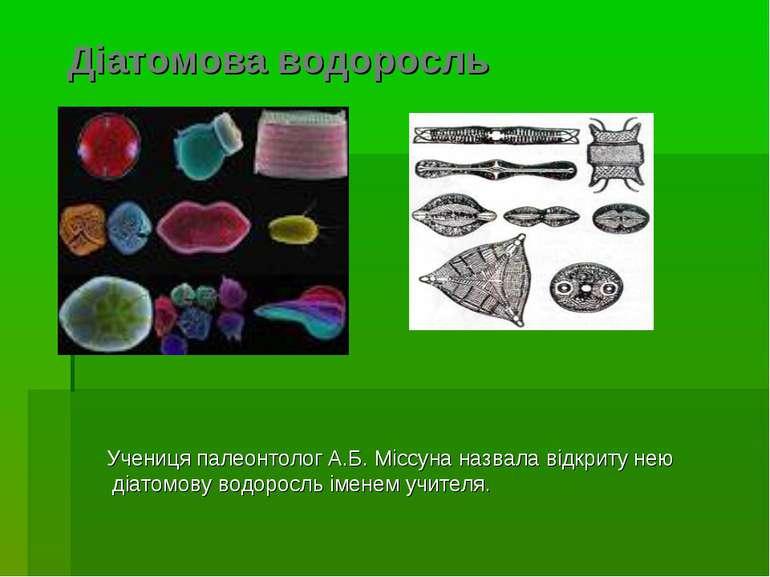 Діатомова водоросль Учениця палеонтолог А.Б. Міссуна назвала відкриту нею діа...
