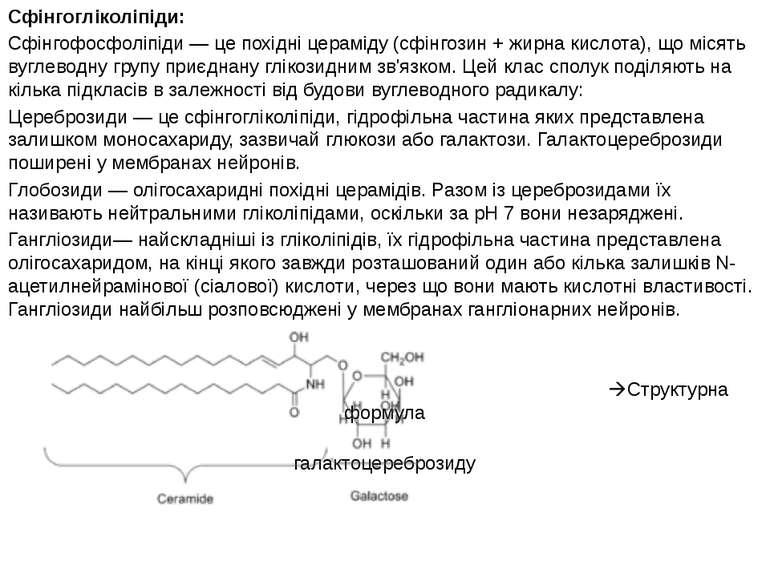 Сфінгогліколіпіди: Сфінгофосфоліпіди — це похідні цераміду (сфінгозин + жирна...