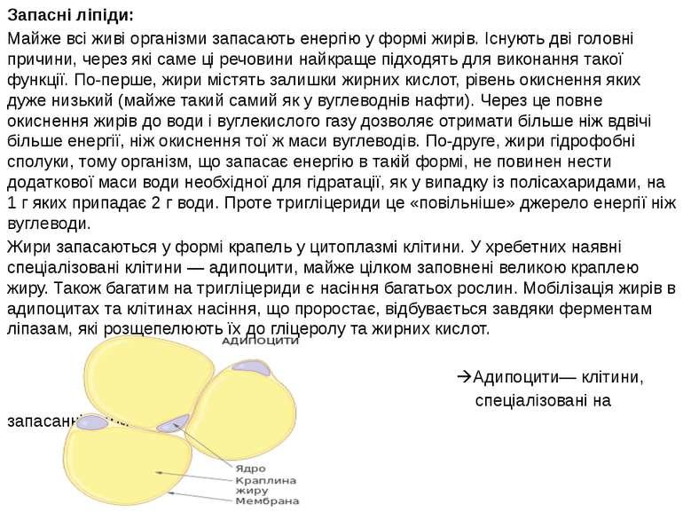 Запасні ліпіди: Майже всі живі організми запасають енергію у формі жирів. Існ...