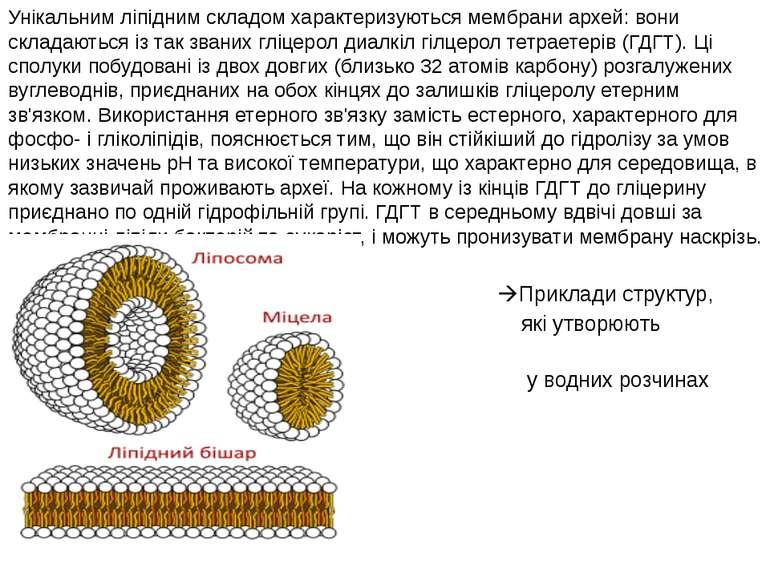 Унікальним ліпідним складом характеризуються мембрани архей: вони складаються...