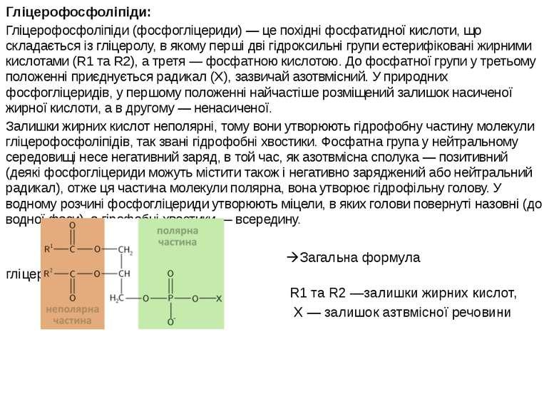 Гліцерофосфоліпіди: Гліцерофосфоліпіди (фосфогліцериди) — це похідні фосфатид...