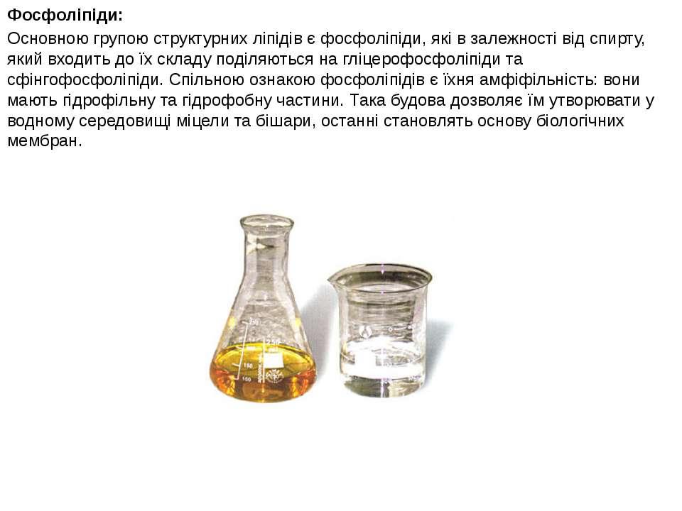 Фосфоліпіди: Основною групою структурних ліпідів є фосфоліпіди, які в залежно...