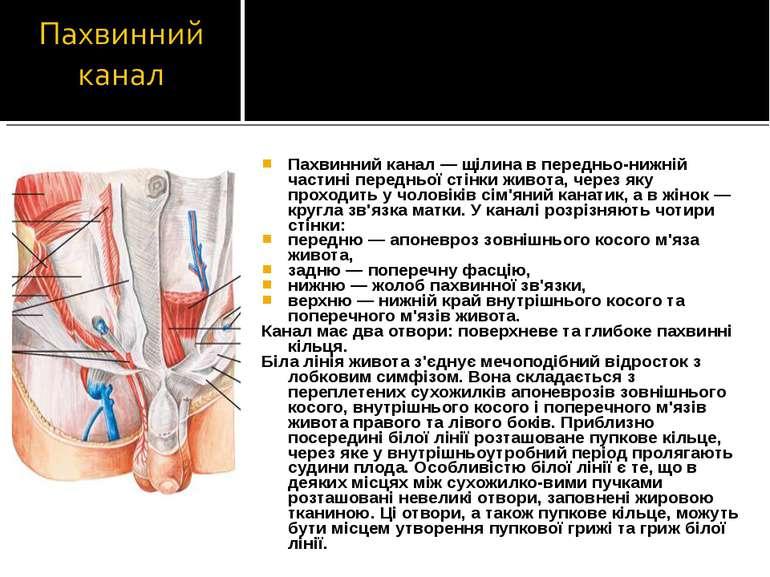 Пахвинний канал — щілина в передньо-нижній частині передньої стінки живота, ч...