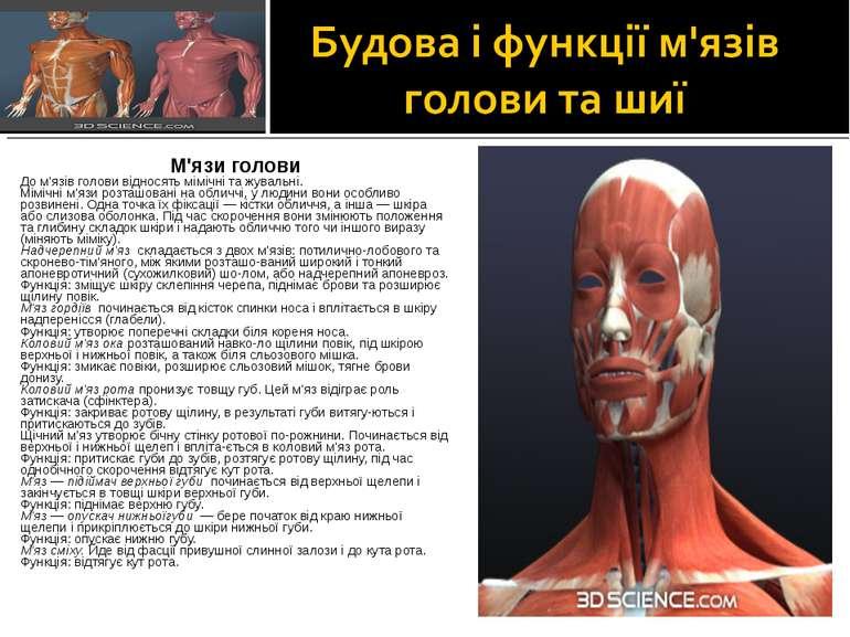 М'язи голови До м'язів голови відносять мімічні та жувальні. Мімічні м'язи ро...