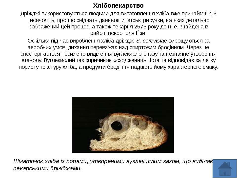 Хлібопекарство Дріжджі використовуються людьми для виготовлення хліба вже при...