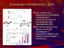 Взаємодія наномолекул і ДНК (a) Схематичне зображення інгібування і реактивац...