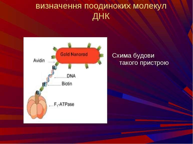 Молукулярний двигун для визначення поодиноких молекул ДНК Схима будови такого...
