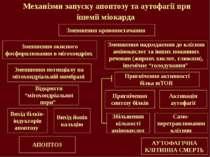 Механізми запуску апоптозу та аутофагії при ішемії міокарда Зменшення кровопо...