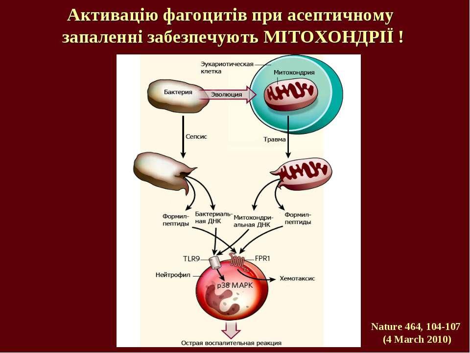 Активацію фагоцитів при асептичному запаленні забезпечують МІТОХОНДРІЇ ! Natu...