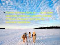 Корінне населення Лапландії — народ саами, традиційно напівкочова народність ...