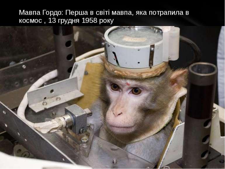 Мавпа Гордо: Перша в світі мавпа, яка потрапила в космос , 13 грудня 1958 року