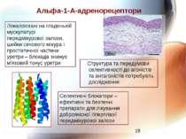 Альфа-1-А-адренорецептори Структура та передумови селективності до агоністів ...