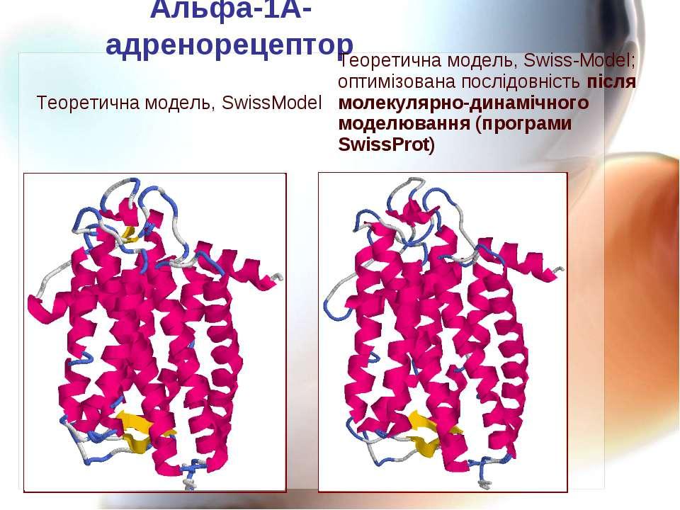Альфа-1А-адренорецептор Теоретична модель, SwissModel Теоретична модель, Swis...
