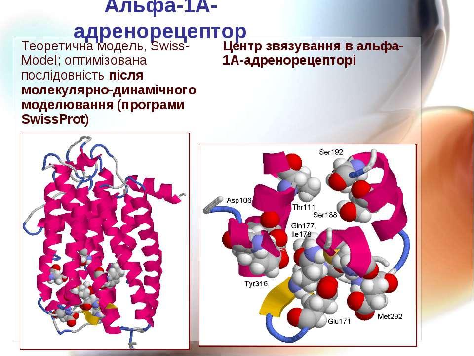 Альфа-1А-адренорецептор Теоретична модель, Swiss-Model; оптимізована послідов...