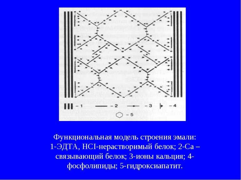 Функциональная модель строения эмали: 1-ЭДТА, НСІ-нерастворимый белок; 2-Са –...